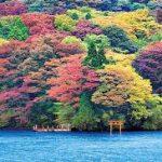 箱根の紅葉2016の見頃はいつまで?見所や穴場情報も!